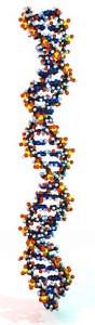 Erbkrankheiten werden über die DNA weitergegeben.
