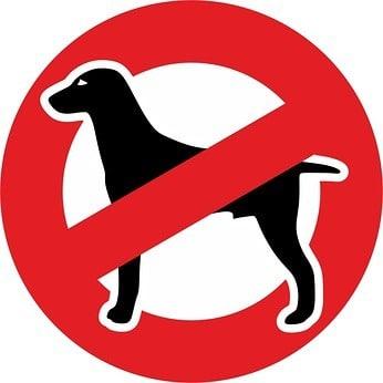 Es gibt viele Gründe einen Dobermann Hund nicht zu kaufen. Bitte prüfen Sie diese Checkliste hier ganz genau bevor Sie sich für einen Dobermann entscheiden!