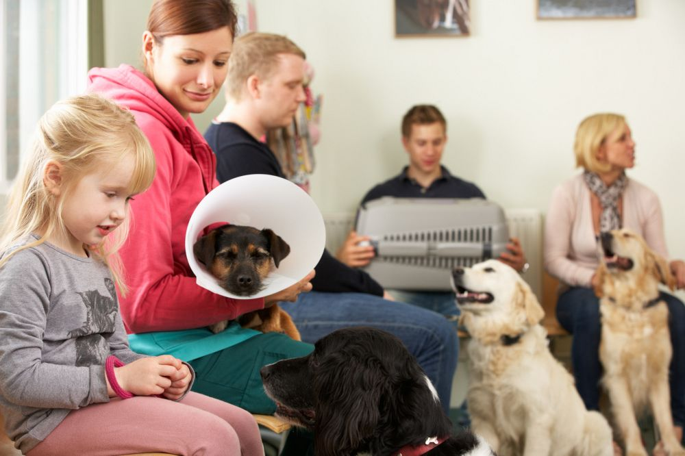 Wann muss ich mit meinem Dobermann zum Tierarzt?