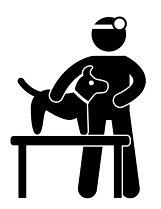 Nehmen Sie die Vorsorgeuntersuchungen beim Tierarzt wahr!