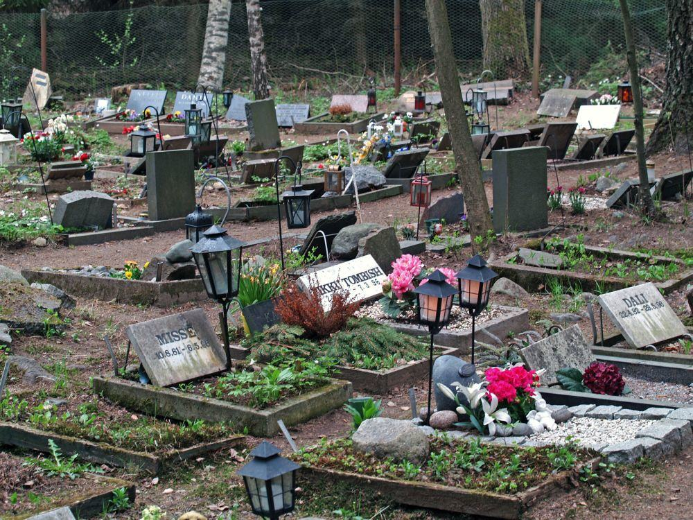 Den Dobermann auf dem Tierfriedhof begraben.