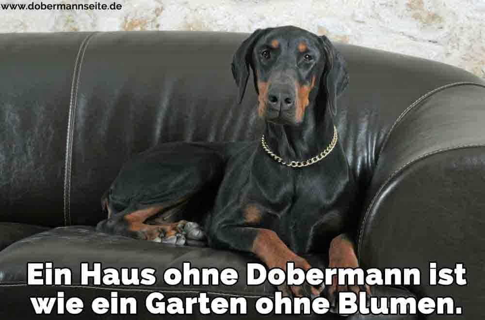 Ein Dobermann sitzt auf dem Sofa