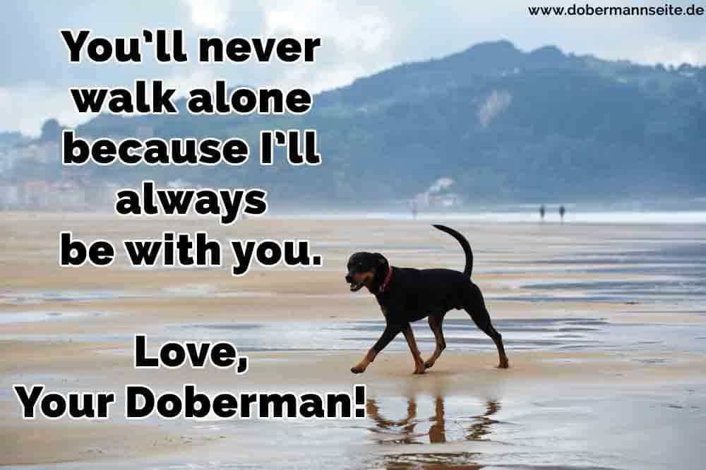 Ein Dobermann zu Fuß am Strand