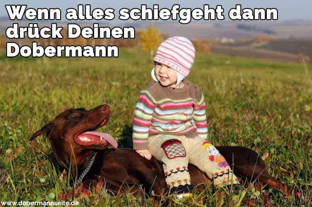 Ein Kind in seinem Dobermann sitzt