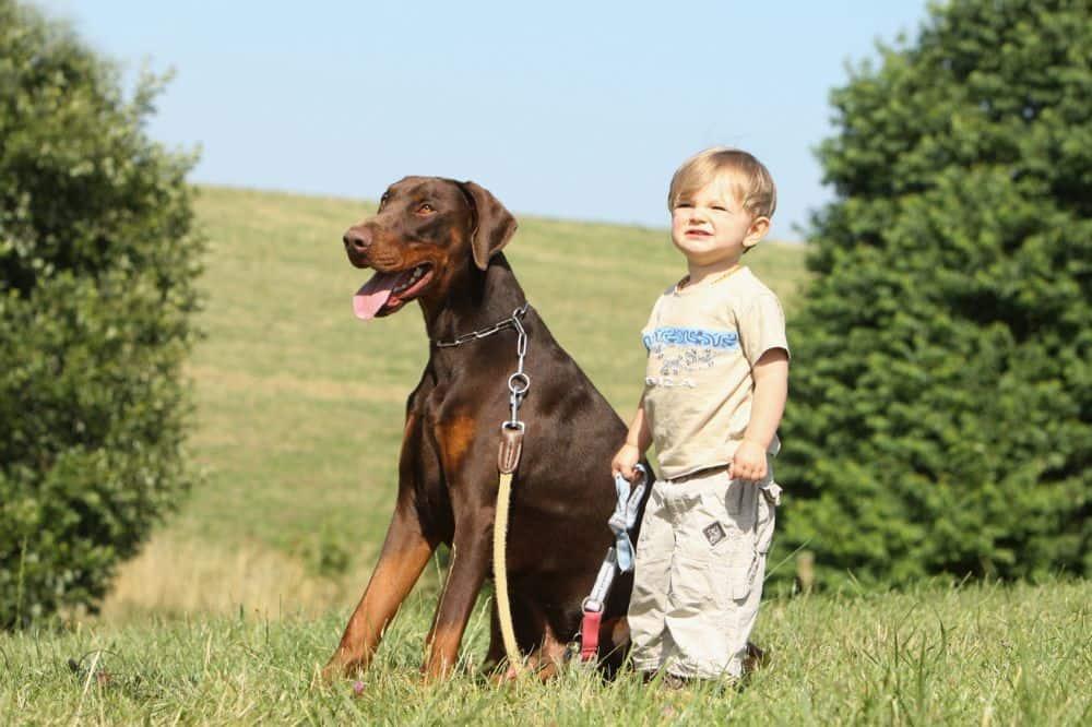 Kleines Kind mit Dobermann